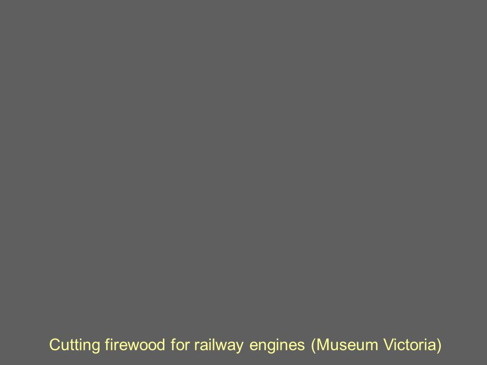 Cutting firewood for railway engines (Museum Victoria)