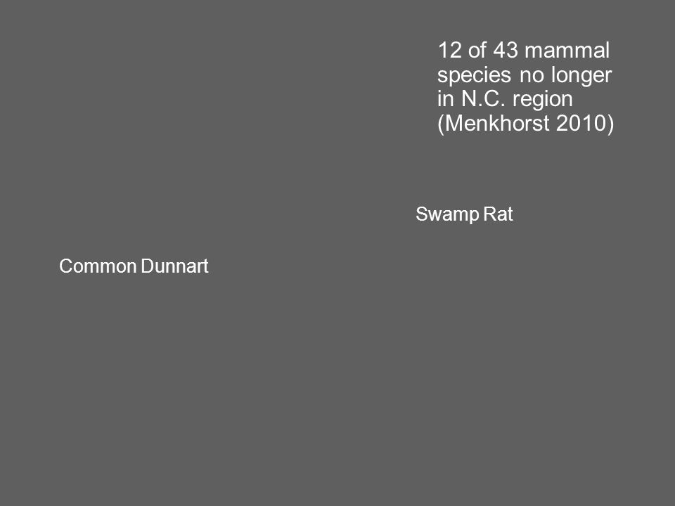 Swamp Rat Common Dunnart 12 of 43 mammal species no longer in N.C. region (Menkhorst 2010)