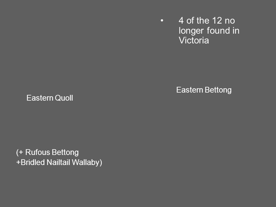 Eastern Bettong Eastern Quoll 4 of the 12 no longer found in Victoria (+ Rufous Bettong +Bridled Nailtail Wallaby)