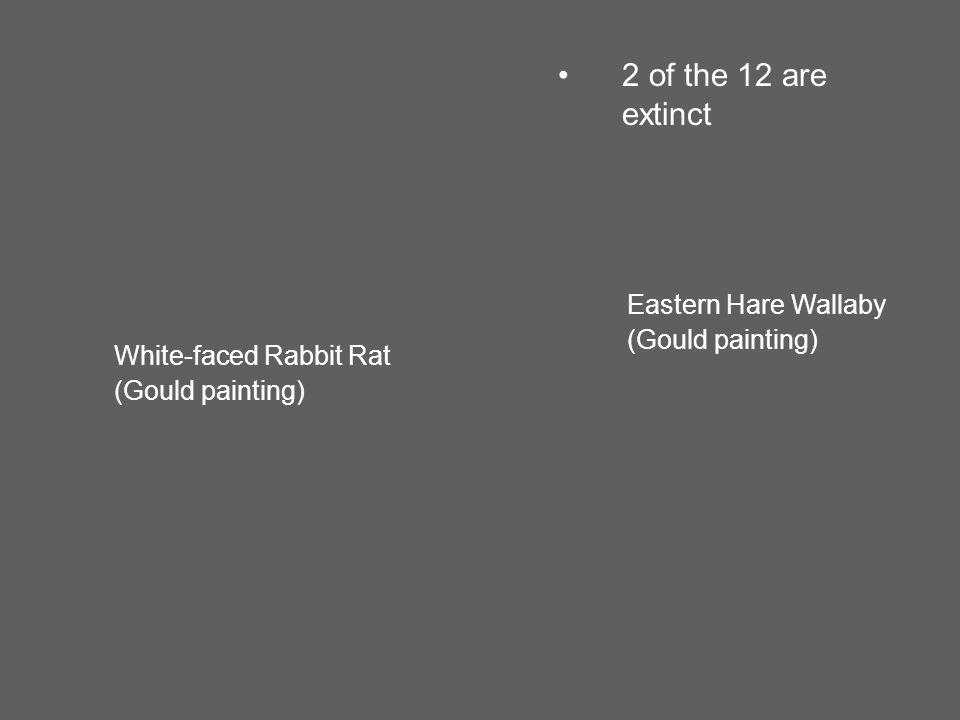 Eastern Hare Wallaby (Gould painting) White-faced Rabbit Rat (Gould painting) 2 of the 12 are extinct
