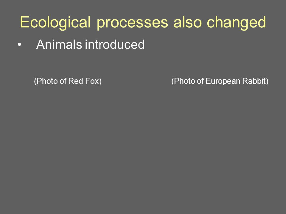 Ecological processes also changed Animals introduced (Photo of European Rabbit)(Photo of Red Fox)