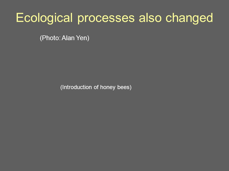 Ecological processes also changed (Photo: Alan Yen) (Introduction of honey bees)