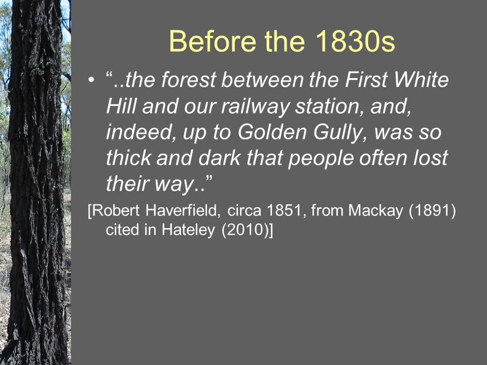 """Before the 1830s """"..the forest between the First White Hill and our railway station, and, indeed, up to Golden Gully, was so thick and dark that peopl"""