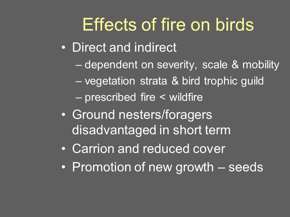 Effects of fire on birds Direct and indirect –dependent on severity, scale & mobility –vegetation strata & bird trophic guild –prescribed fire < wildfire Ground nesters/foragers disadvantaged in short term Carrion and reduced cover Promotion of new growth – seeds