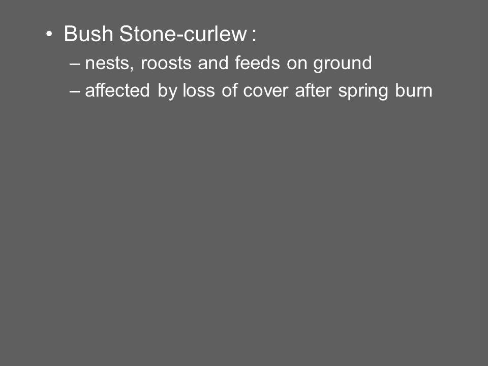 Bush Stone-curlew : –nests, roosts and feeds on ground –affected by loss of cover after spring burn