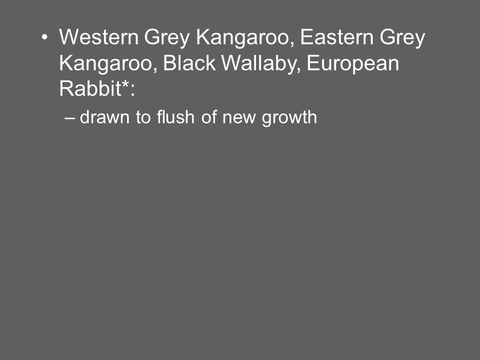 Western Grey Kangaroo, Eastern Grey Kangaroo, Black Wallaby, European Rabbit*: –drawn to flush of new growth