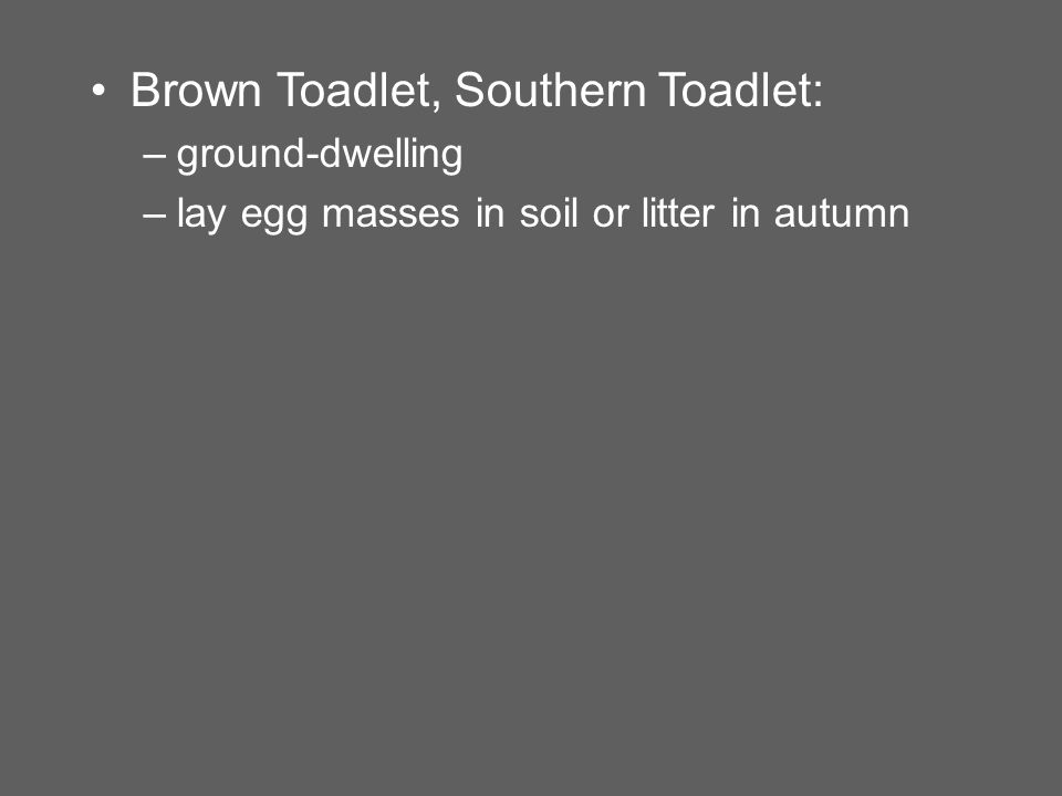 Brown Toadlet, Southern Toadlet: –ground-dwelling –lay egg masses in soil or litter in autumn