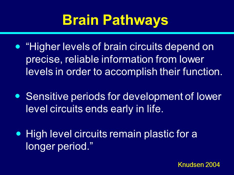 "Brain Pathways ""Higher levels of brain circuits depend on precise, reliable information from lower levels in order to accomplish their function. Sensi"