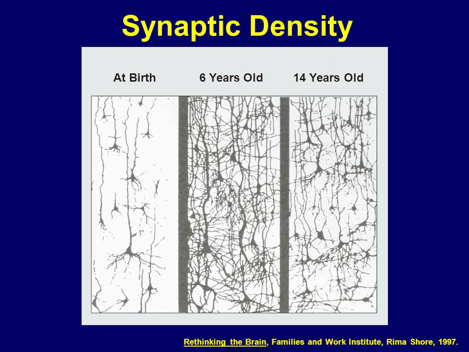 03-012 Synaptic Density Rethinking the Brain, Families and Work Institute, Rima Shore, 1997. At Birth6 Years Old14 Years Old