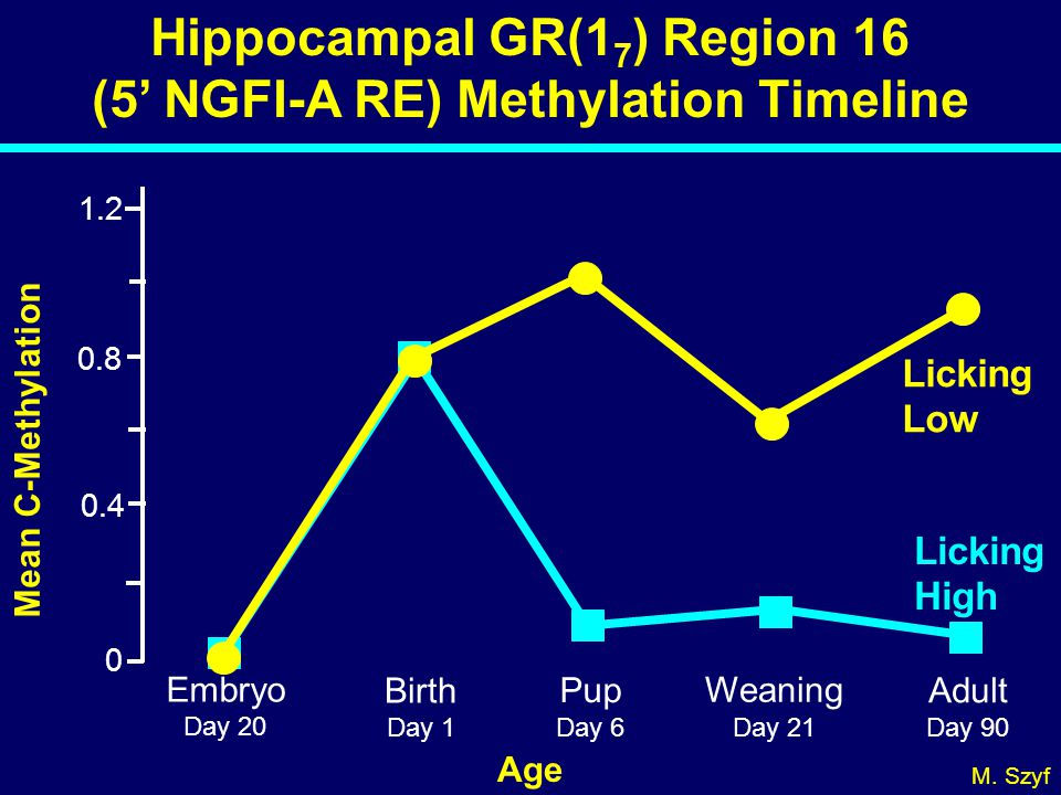 Hippocampal GR(1 7 ) Region 16 (5' NGFI-A RE) Methylation Timeline 0 0.4 0.8 1.2 Mean C-Methylation Embryo Day 20 Birth Day 1 Pup Day 6 Adult Day 90 W