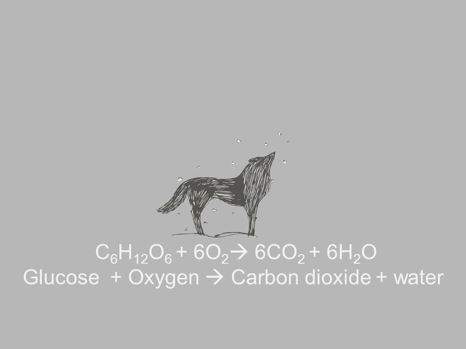 C 6 H 12 O 6 + 6O 2  6CO 2 + 6H 2 O Glucose + Oxygen  Carbon dioxide + water