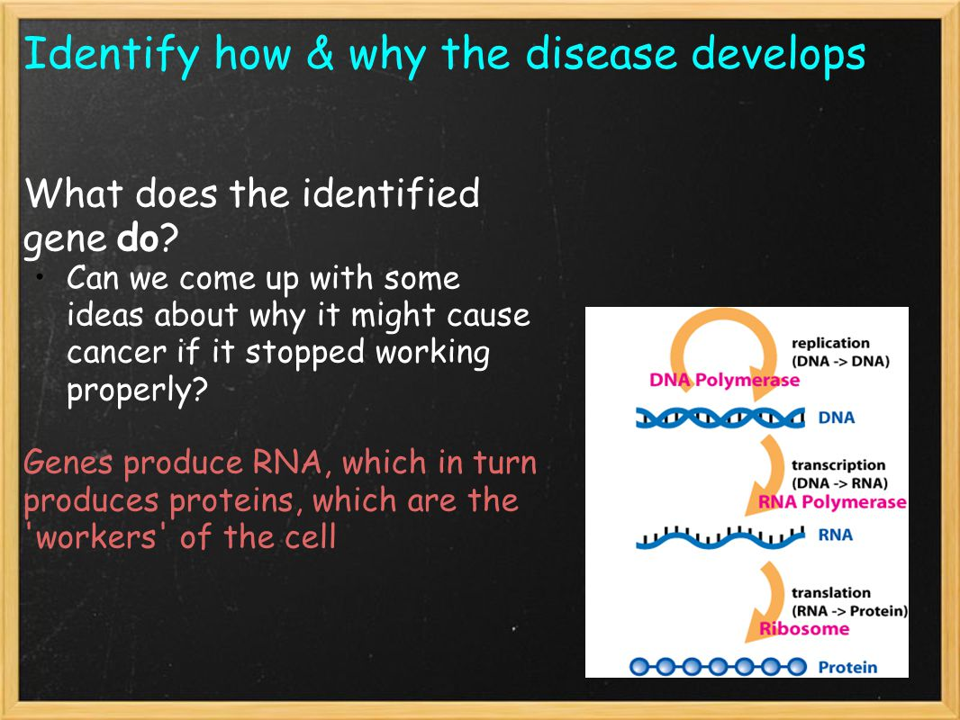 Identify how & why the disease develops Q.What protein does the gene produce.