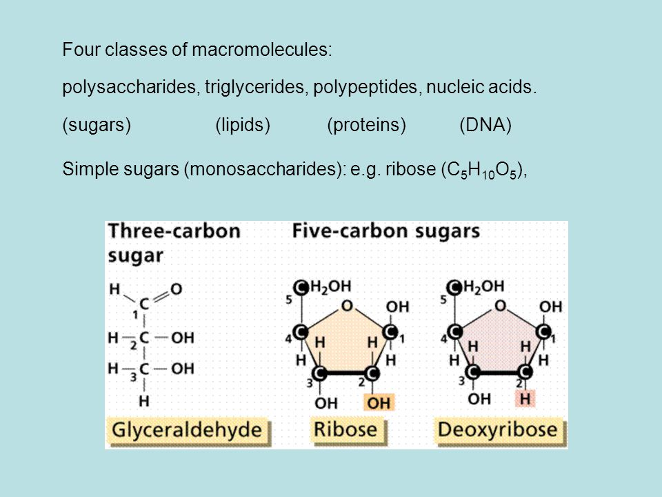 Four classes of macromolecules: polysaccharides, triglycerides, polypeptides, nucleic acids.