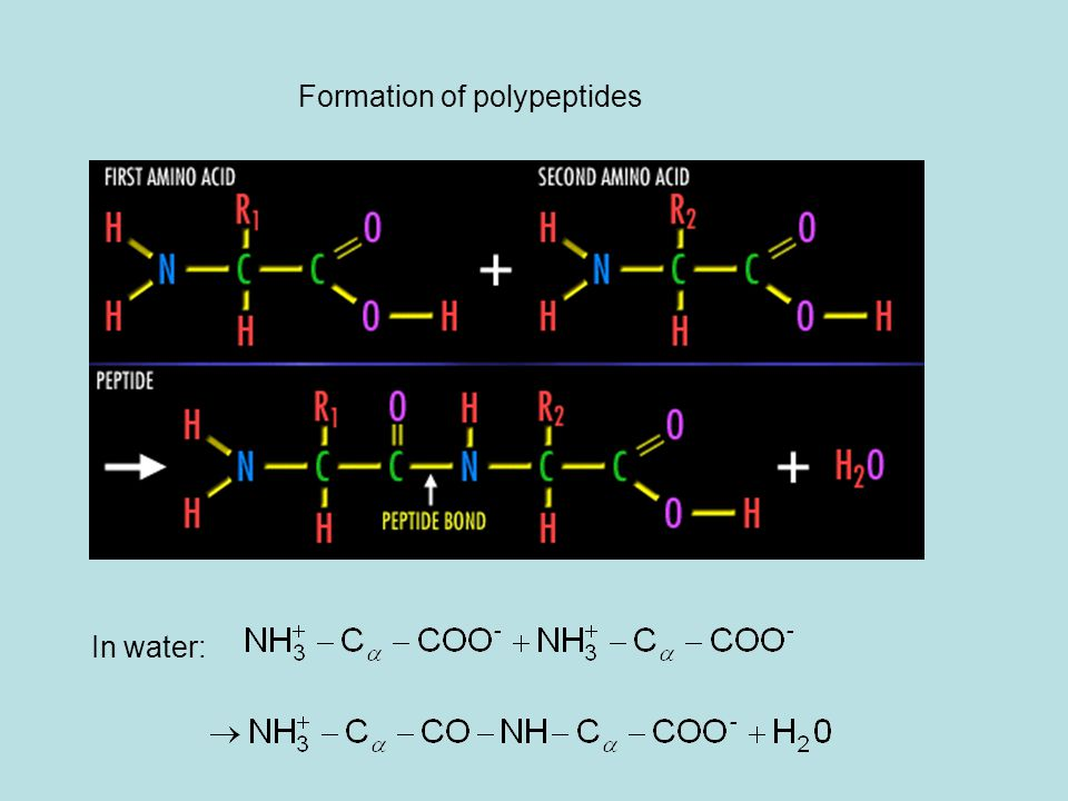 Formation of polypeptides In water: