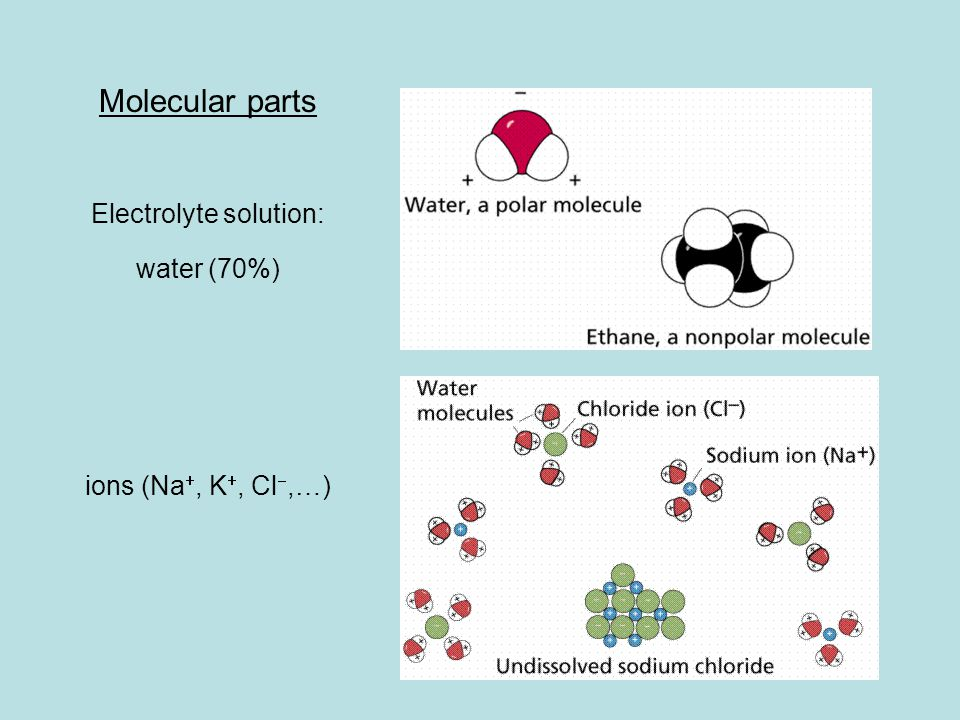 Molecular parts Electrolyte solution: water (70%) ions (Na , K , Cl ,…)