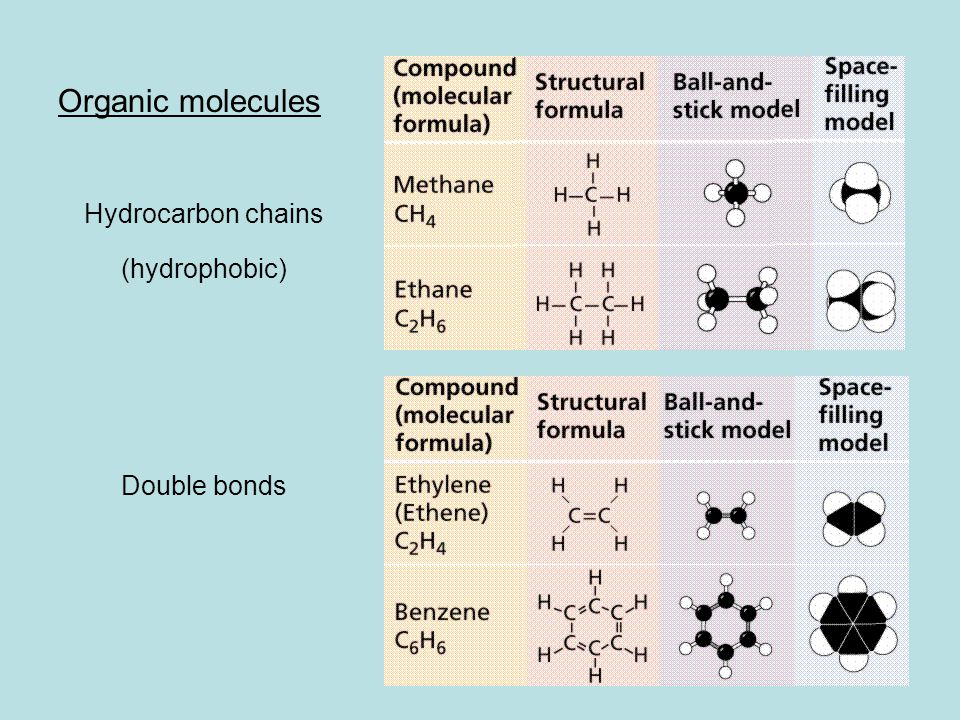 Organic molecules Hydrocarbon chains (hydrophobic) Double bonds