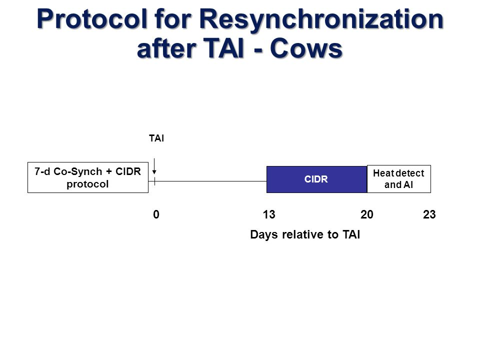 CIDR Heat detect and AI TAI Protocol for Resynchronization after TAI - Heifers 0 12 19 22 7-d Co-Synch + CIDR protocol Days relative to TAI