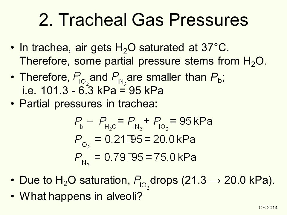 CS 2014 2. Tracheal Gas Pressures In trachea, air gets H 2 O saturated at 37°C. Therefore, some partial pressure stems from H 2 O. Therefore, and are