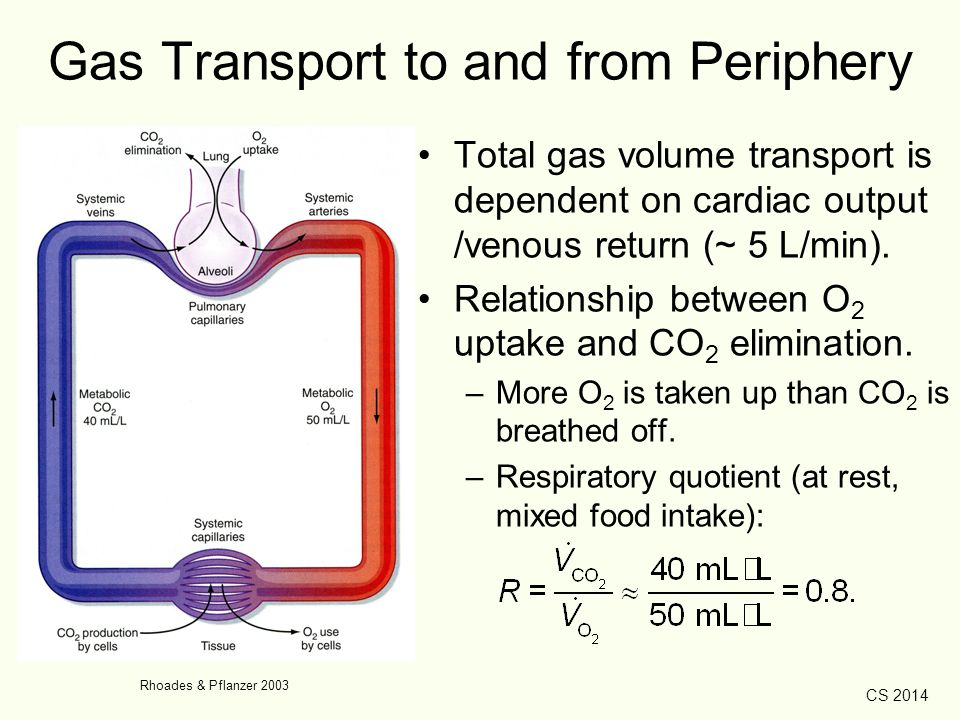 CS 2014 Gas Transport to and from Periphery Total gas volume transport is dependent on cardiac output /venous return (~ 5 L/min). Relationship between