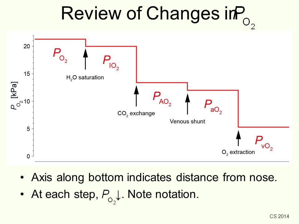 CS 2014 Review of Changes in Axis along bottom indicates distance from nose. At each step, ↓. Note notation.