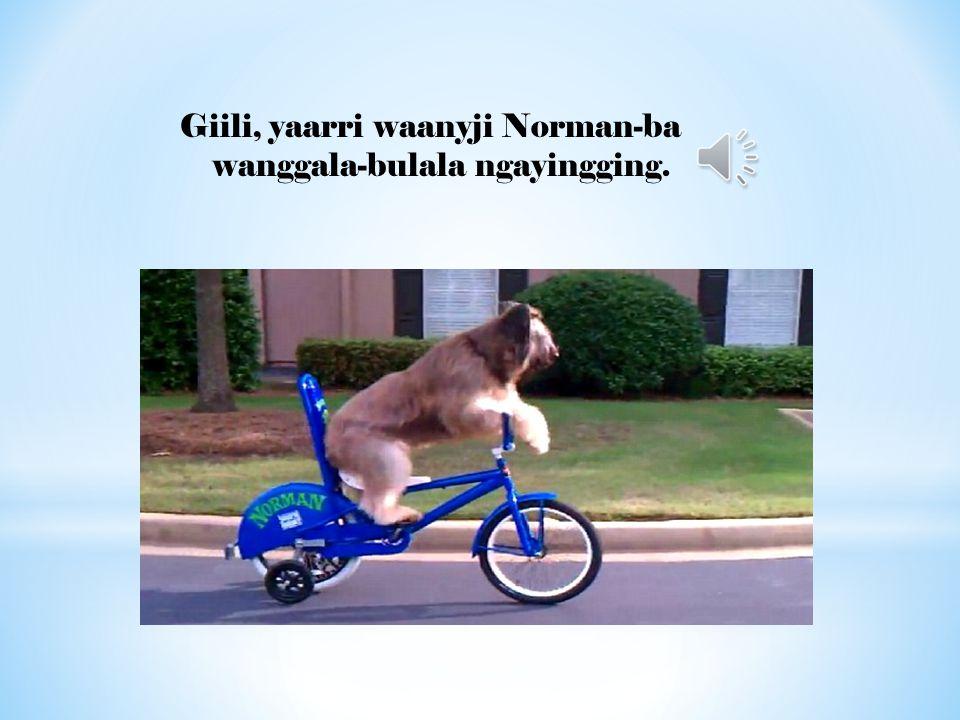Giili, yaarri waanyji Norman-ba wanggala-bulala ngayingging.
