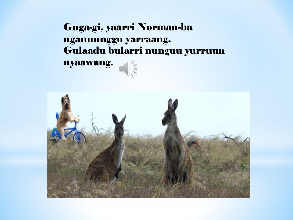 Guga-gi, yaarri Norman-ba nganuunggu yarraang. Gulaadu bularri nunguu yurruun nyaawang.