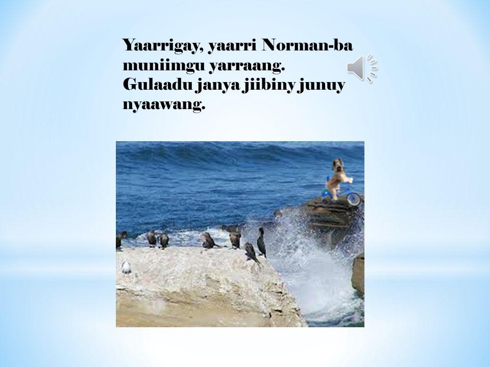 Yaarrigay, yaarri Norman-ba muniimgu yarraang. Gulaadu janya jiibiny junuy nyaawang.