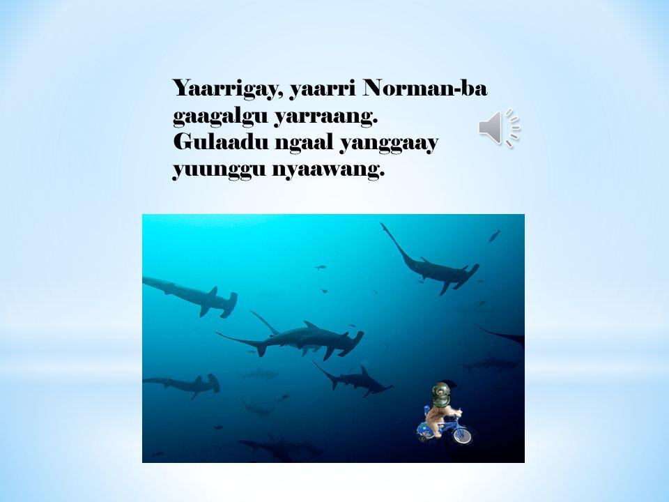Yaarrigay, yaarri Norman-ba gaagalgu yarraang. Gulaadu ngaal yanggaay yuunggu nyaawang.