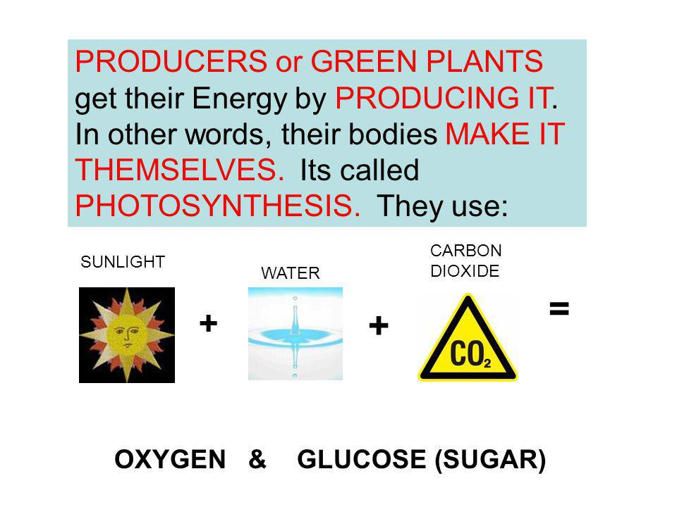 PRODUCERS or GREEN PLANTS get their Energy by PRODUCING IT. In other words, their bodies MAKE IT THEMSELVES. Its called PHOTOSYNTHESIS. They use: + =