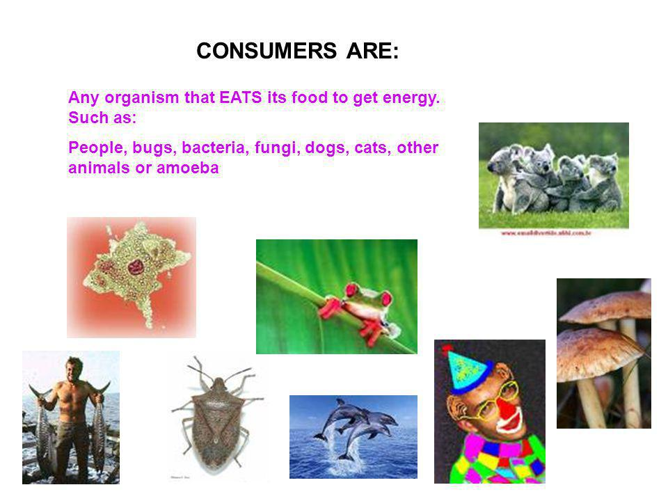 CONSUMERS ARE: Any organism that EATS its food to get energy. Such as: People, bugs, bacteria, fungi, dogs, cats, other animals or amoeba