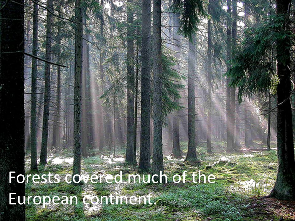 Forests covered much of the European continent.