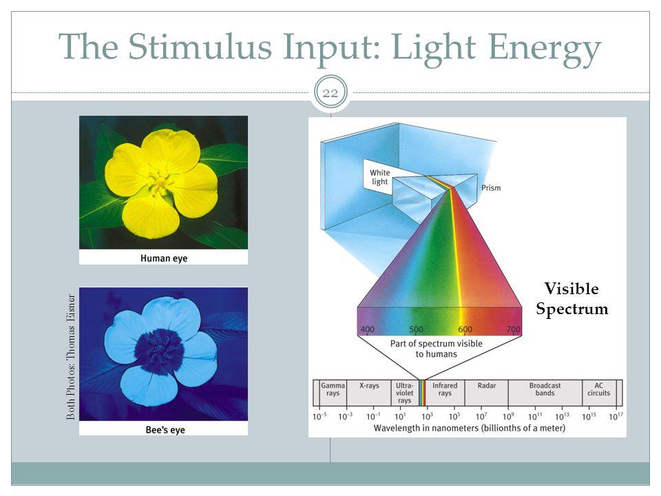 Light Characteristics 23 1. Wavelength (hue/color) 2. Intensity (brightness) 3. Saturation (purity)