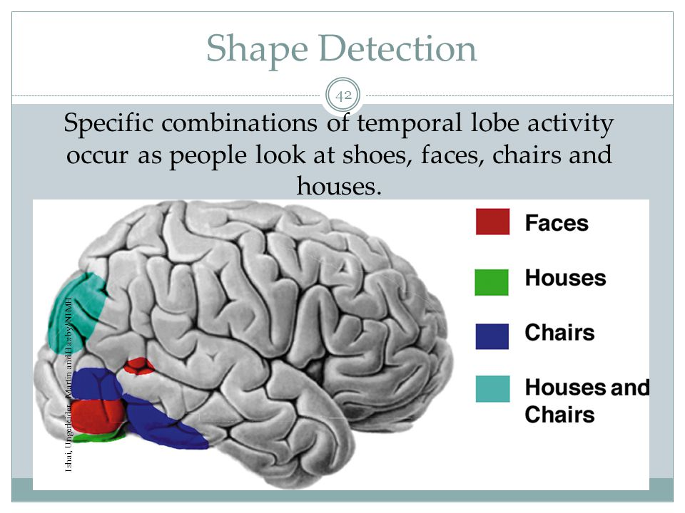 Perception in Brain 43 Our perceptions are a combination of sensory (bottom-up) and cognitive (top-down) processes.