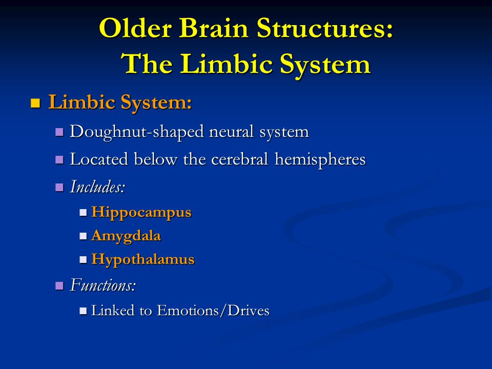 Older Brain Structures: The Limbic System Limbic System: Limbic System: Doughnut-shaped neural system Doughnut-shaped neural system Located below the
