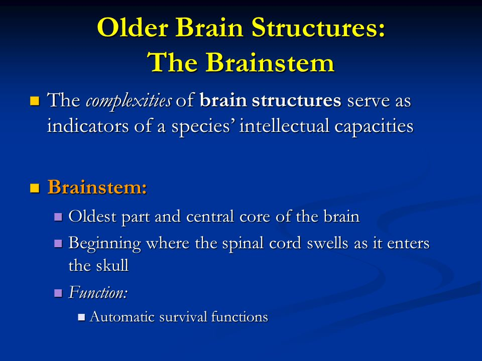 Older Brain Structures: The Brainstem The complexities of brain structures serve as indicators of a species' intellectual capacities The complexities
