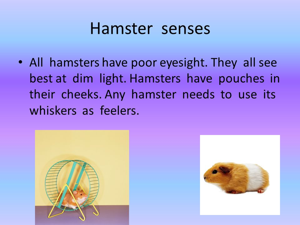 Hamster senses All hamsters have poor eyesight. They all see best at dim light. Hamsters have pouches in their cheeks. Any hamster needs to use its wh