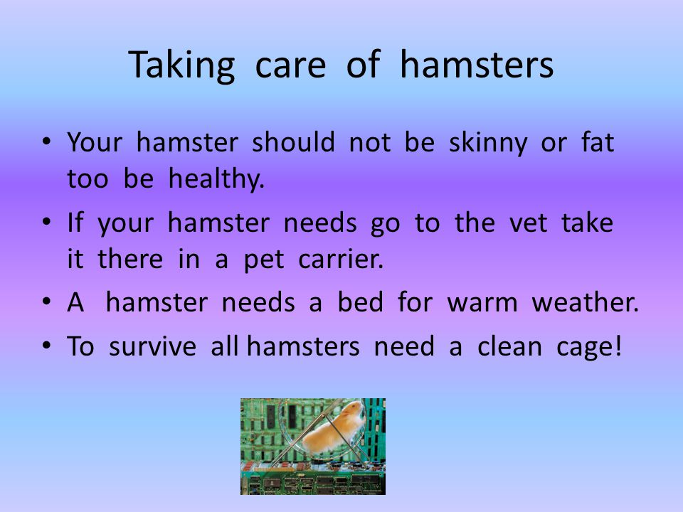 Taking care of hamsters Your hamster should not be skinny or fat too be healthy. If your hamster needs go to the vet take it there in a pet carrier. A