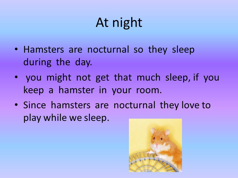 At night Hamsters are nocturnal so they sleep during the day. you might not get that much sleep, if you keep a hamster in your room. Since hamsters ar