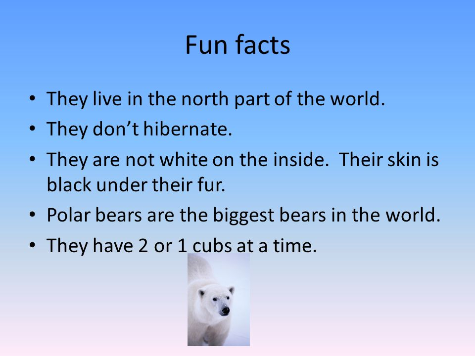 Fun facts They live in the north part of the world.