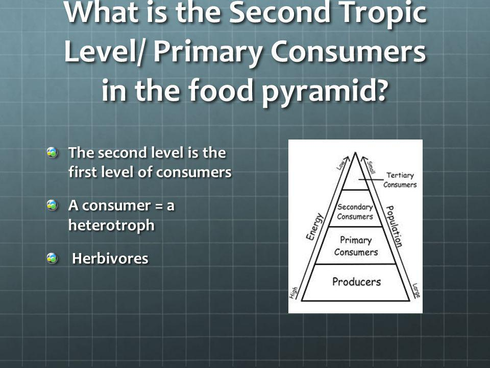 What is the Second Tropic Level/ Primary Consumers in the food pyramid? The second level is the first level of consumers A consumer = a heterotroph He