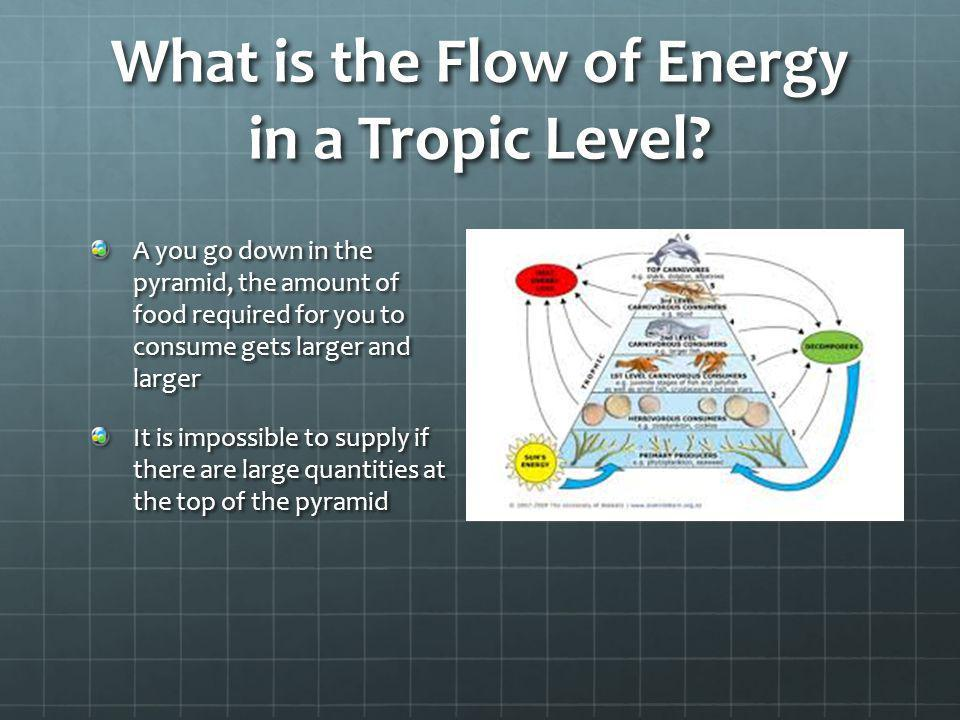 What is the Flow of Energy in a Tropic Level? A you go down in the pyramid, the amount of food required for you to consume gets larger and larger It i