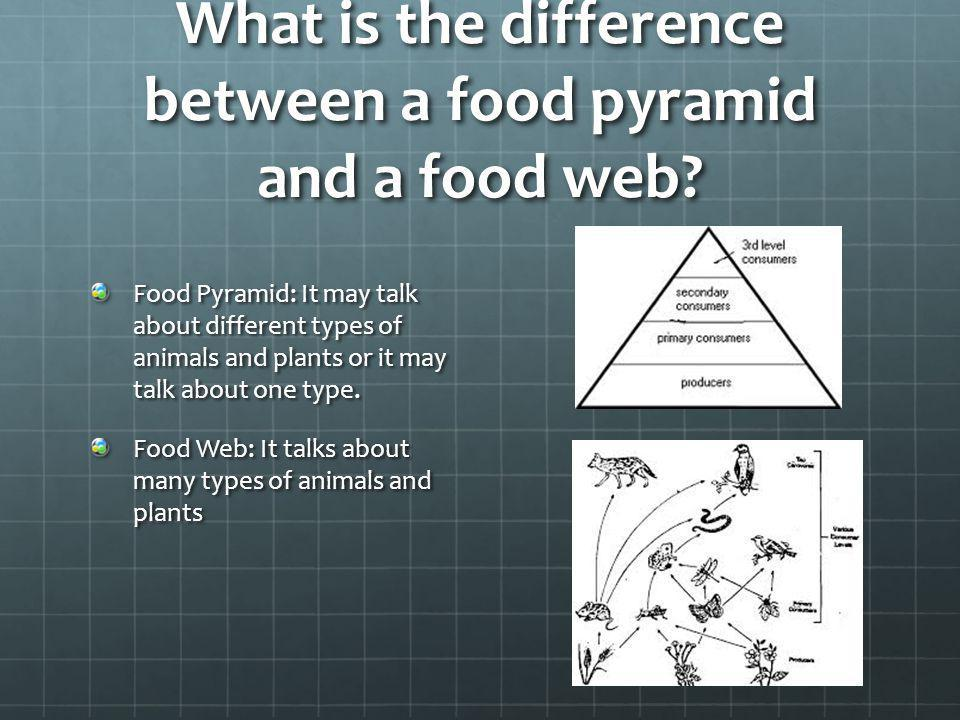 What is the difference between a food pyramid and a food web? Food Pyramid: It may talk about different types of animals and plants or it may talk abo