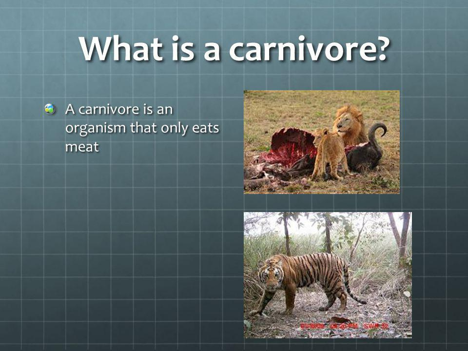 What is a carnivore? A carnivore is an organism that only eats meat