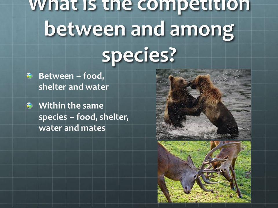 What is the competition between and among species? Between – food, shelter and water Within the same species – food, shelter, water and mates