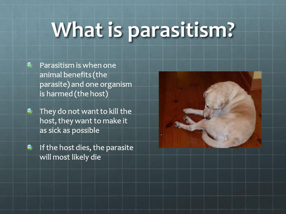 What is parasitism? Parasitism is when one animal benefits (the parasite) and one organism is harmed (the host) They do not want to kill the host, the