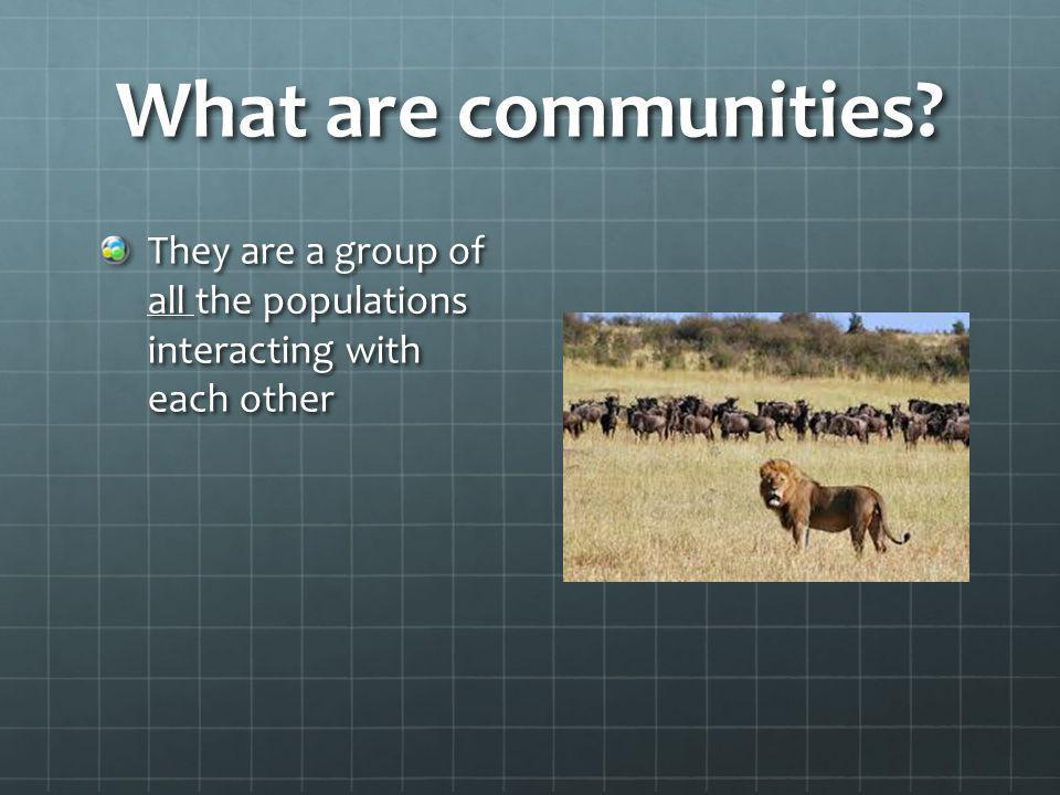 What are communities? They are a group of all the populations interacting with each other