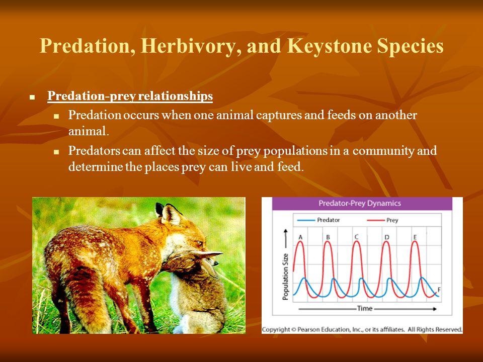 Predation, Herbivory, and Keystone Species Predation-prey relationships Predation occurs when one animal captures and feeds on another animal. Predato