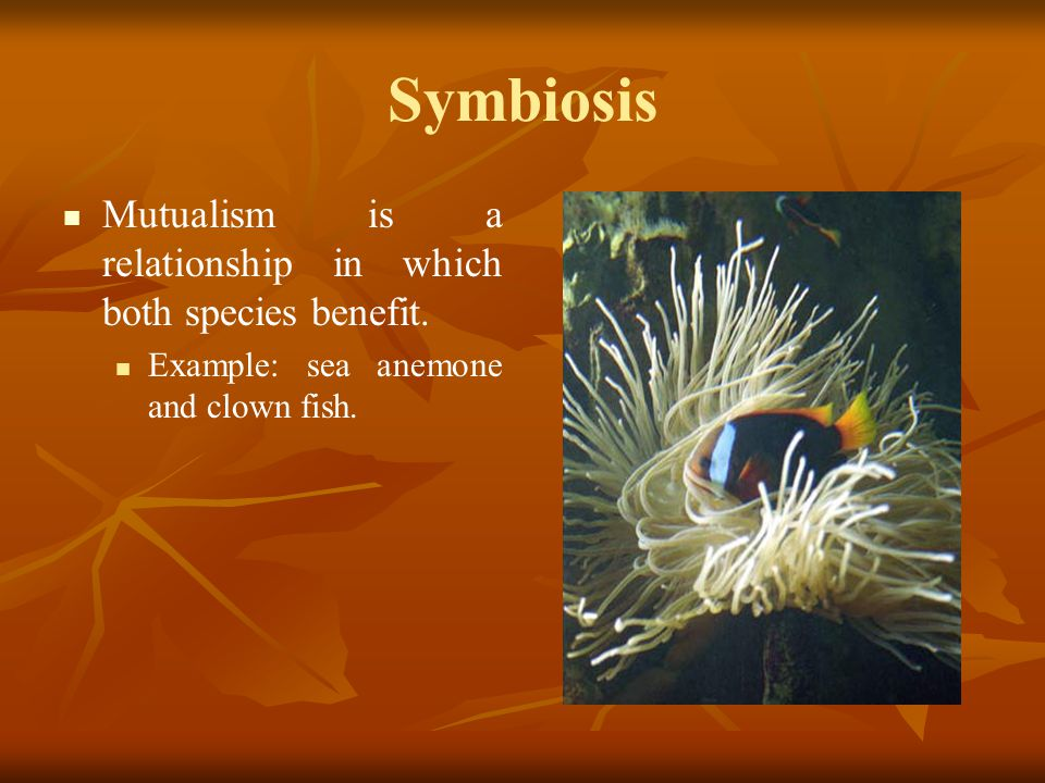 Symbiosis Mutualism is a relationship in which both species benefit. Example: sea anemone and clown fish.