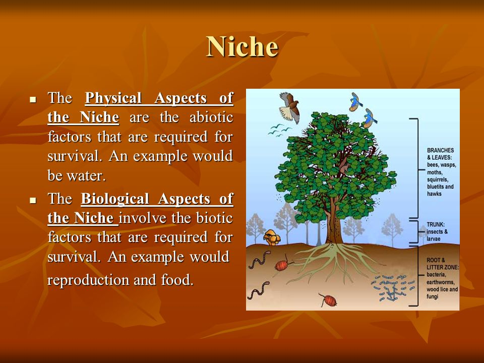 Niche There are two conditions that help define where and how organisms live.