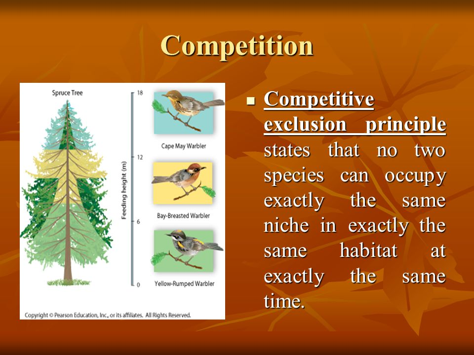 Competition Competitive exclusion principle states that no two species can occupy exactly the same niche in exactly the same habitat at exactly the sa